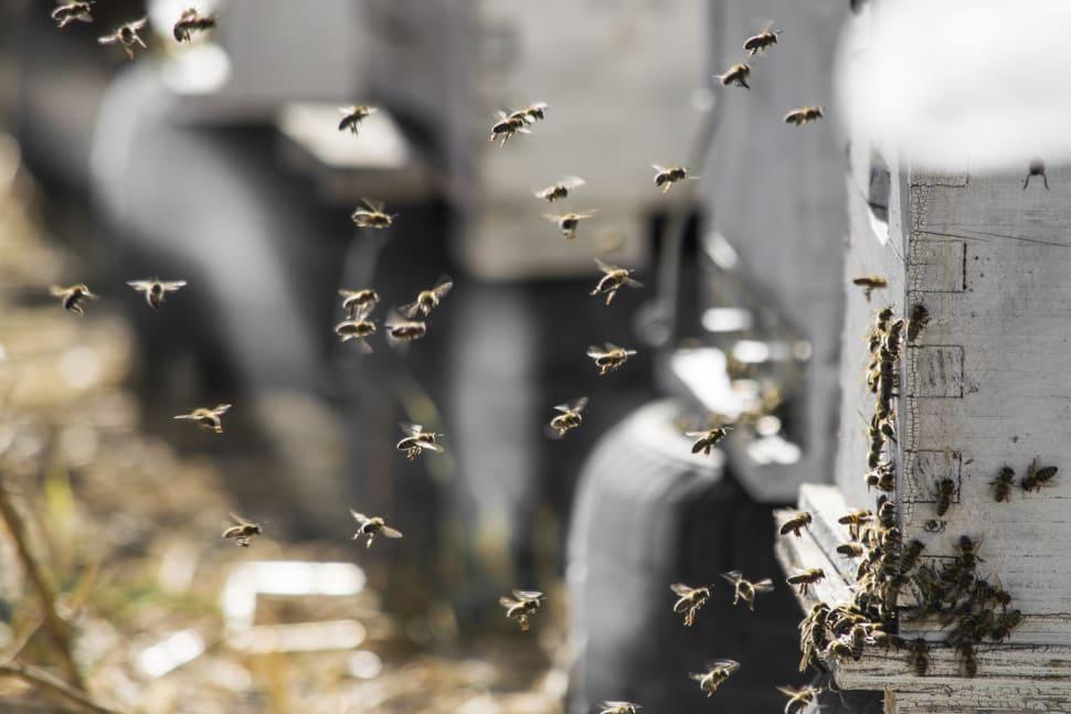 Honey Season in Crete - Best Season