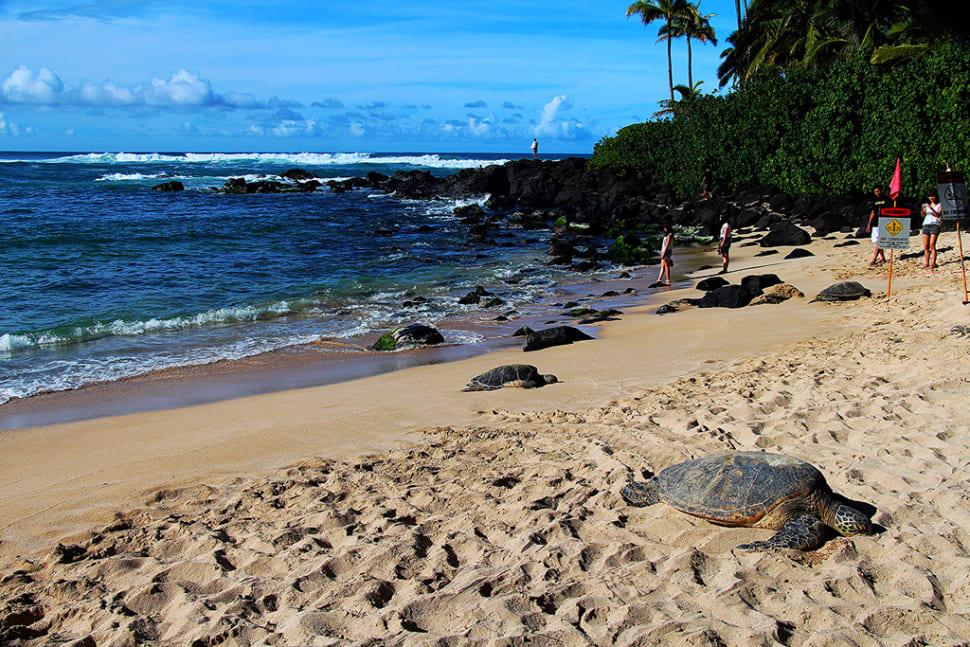 Laniakea or Turtle Beach in Hawaii - Best Season