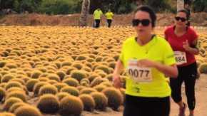 Los Cabos Half Marathon