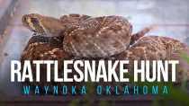 Waynoka Rattlesnake Hunt