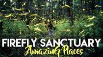 Nanacamilpa Firefly Forest