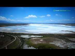 Fuente de Piedra Flamingos