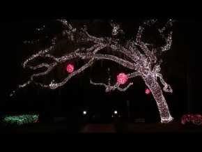 Suwannee Lights