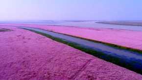 Fiore che fiorisce al lago Poyang