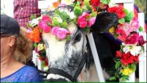 Festival de la Novilla