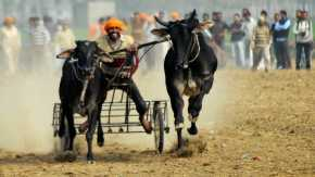Rural Olympics in Kila Raipur