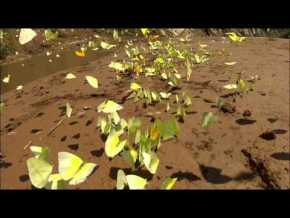 Papillons dans la vallée de Tucavaca