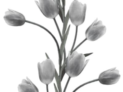 Fototapet R13062 La Vie En Tulipe, White billede 1 af Rebel Walls