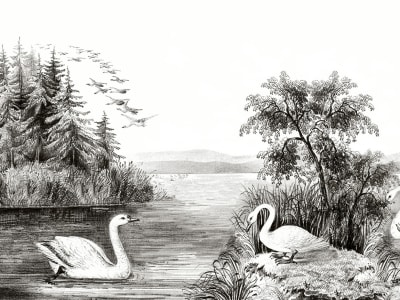 Wall Mural R16221 Swan Lake image 1 by Rebel Walls