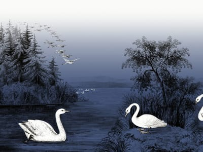 Wall Mural R16222 Swan Lake, Nightfall image 1 by Rebel Walls