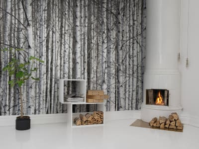 Tapet R13031 Birch Trunks bilde 1 av Rebel Walls