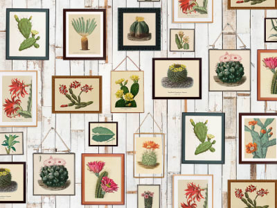 Mural de pared R15321 Cactus Wall Art imagen 1 por Rebel Walls