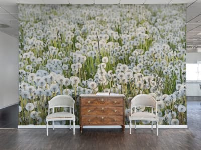 Wall Mural R16351 Dandelions image 1 by Rebel Walls