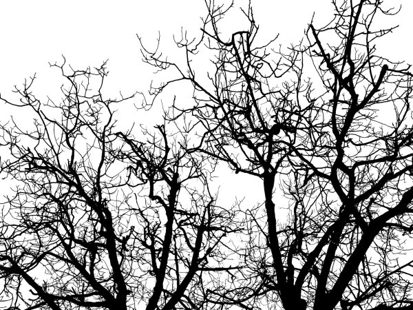 Wall Mural R10121 Branches image 1 by Rebel Walls