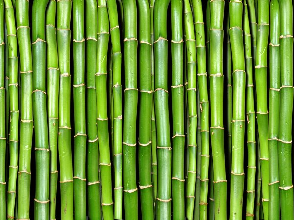 Wall Mural R11821 Bamboo image 1 by Rebel Walls