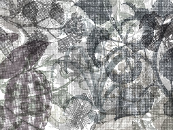 Wall Mural R12023 Jelly Belly Plants, black & white image 1 by Rebel Walls