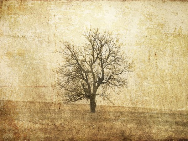 Wall Mural R12081 The Lonely Tree image 1 by Rebel Walls