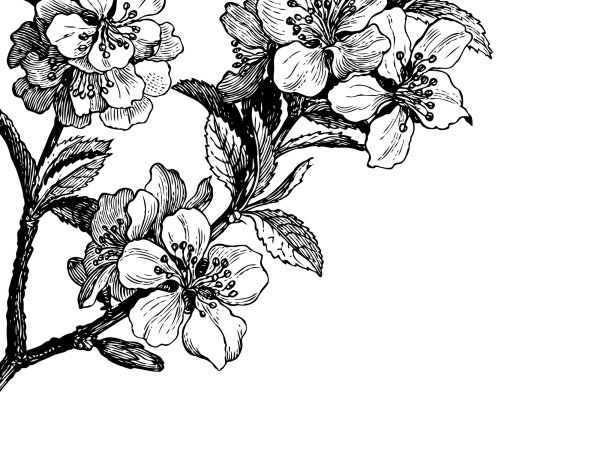 Wall Mural R12652 Springtime, black&white image 1 by Rebel Walls