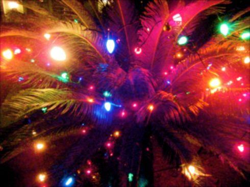 Carla Baron's - Christmas Calypso Bows w/ Crab