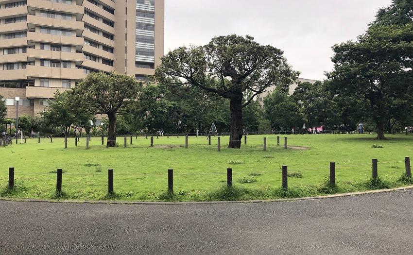 中目黒公園_1