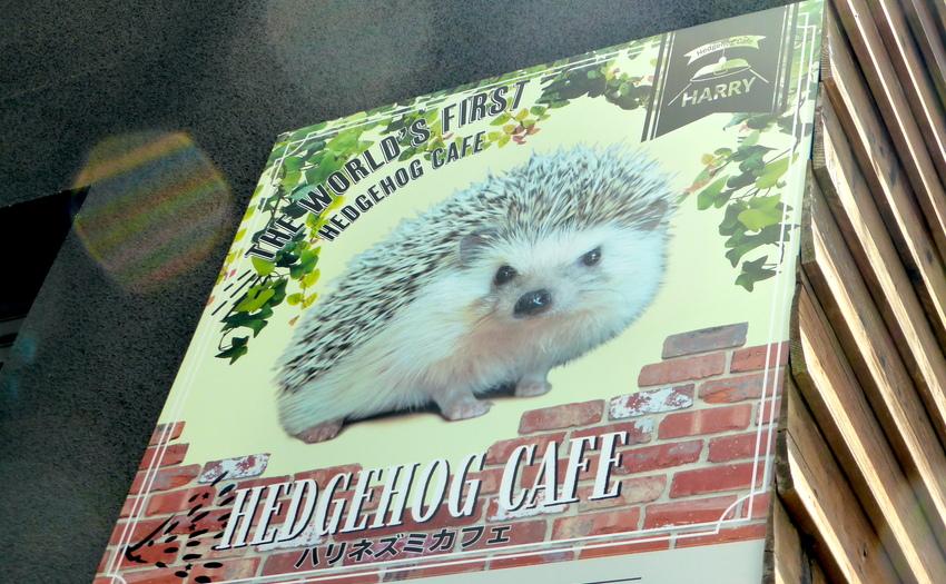 Hedgehog cafe HARRY 六本木店_1