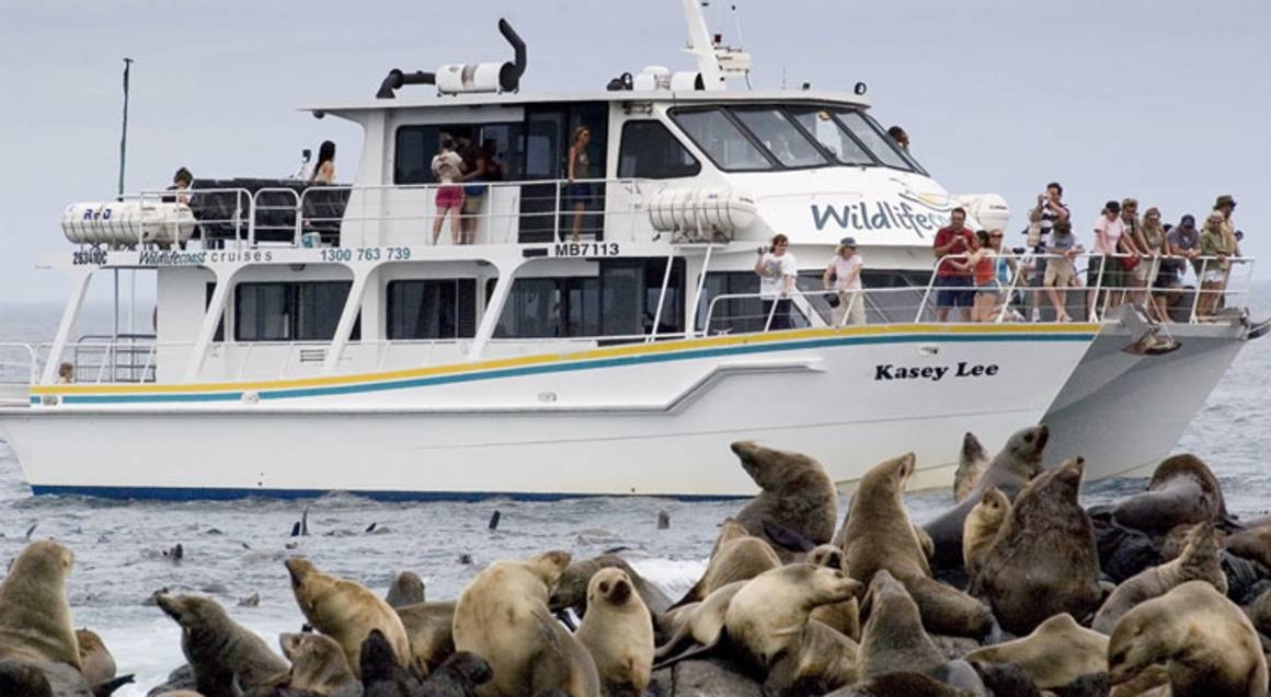 Seal Watching Cruise with Afternoon Tea