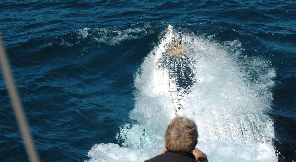 Coffs Harbour Whale Watching Cruise