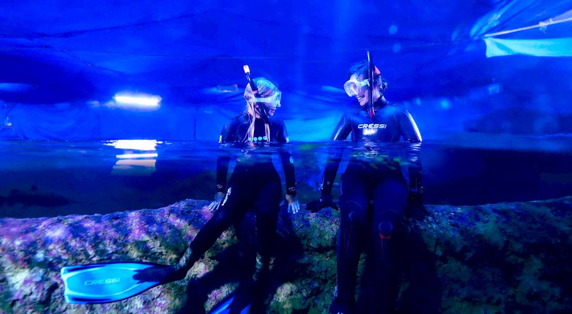 Snorkel with Sharks at The Aquarium of Western Australia