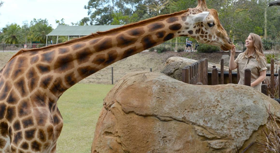 2 Day Australia Zoo Entry with Animal Hospital Tour