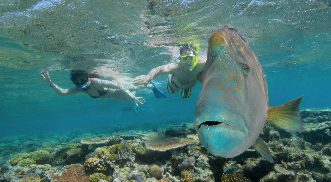 Snorkelling on the Great Barrier Reef with Lunch