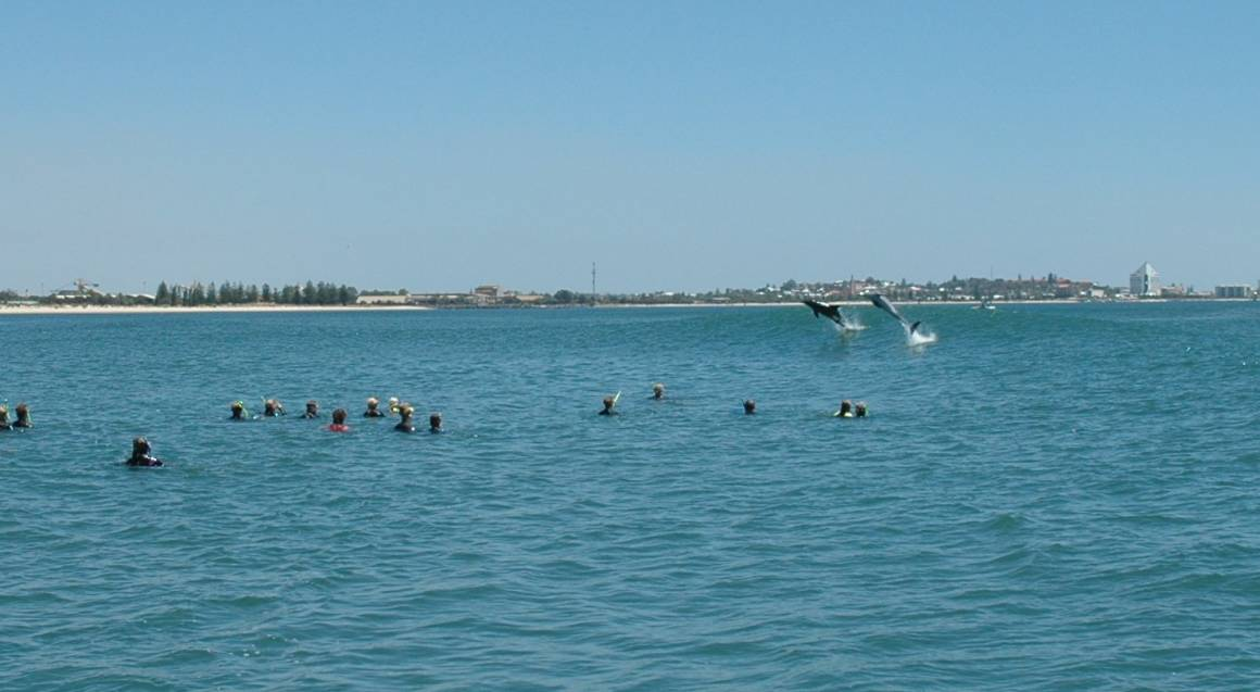 Swim with Wild Dolphins - Summer Season