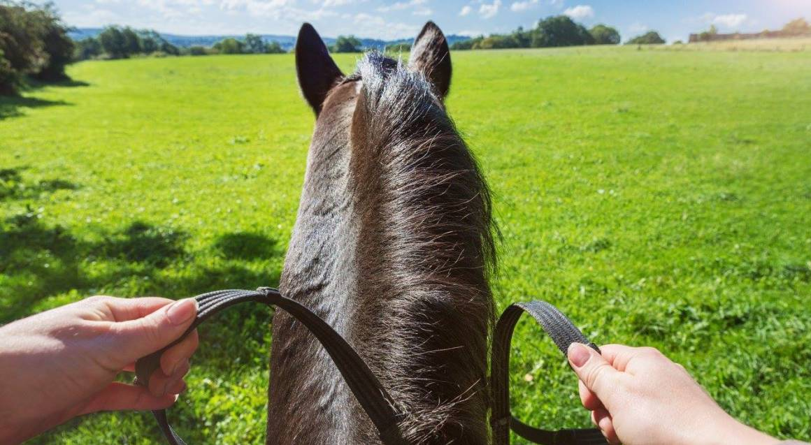 Yarra Valley State Forest Horse Trail Ride - 2 Hours