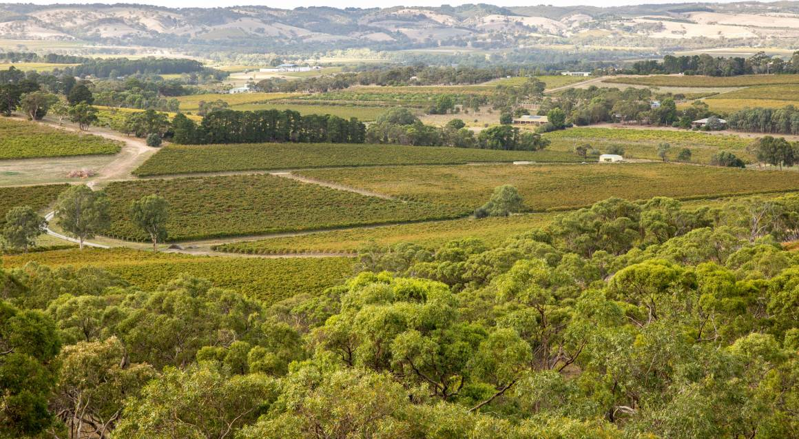 view overlooking d'arenberg vineyards with hills in the background