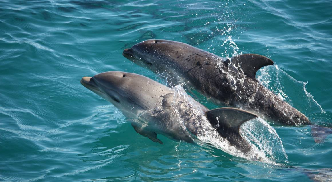 Dolphin and Seal Watching Cruise - 90 Minutes