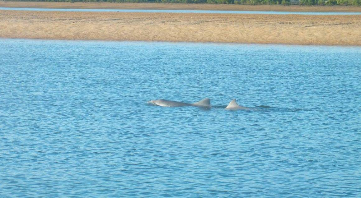 two dolphins swimming in the water