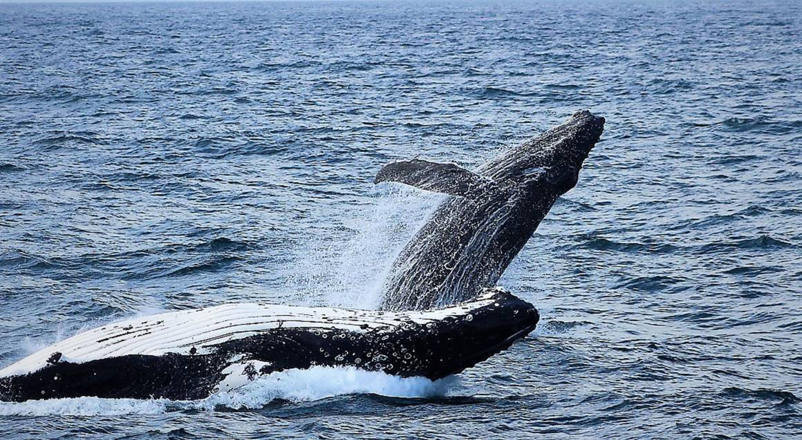 Sydney Harbour Whale Watching Cruise - Weekday