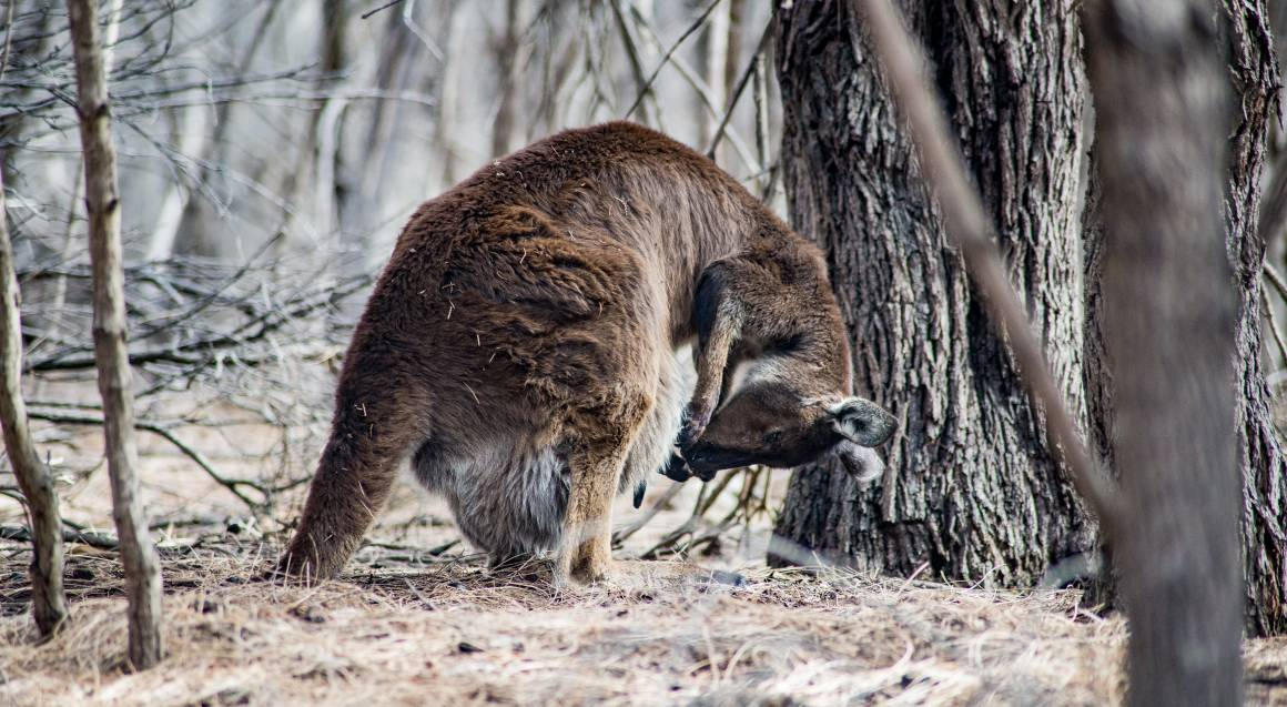 Kangaroo Island Wildlife Discovery Day Tour - For 4