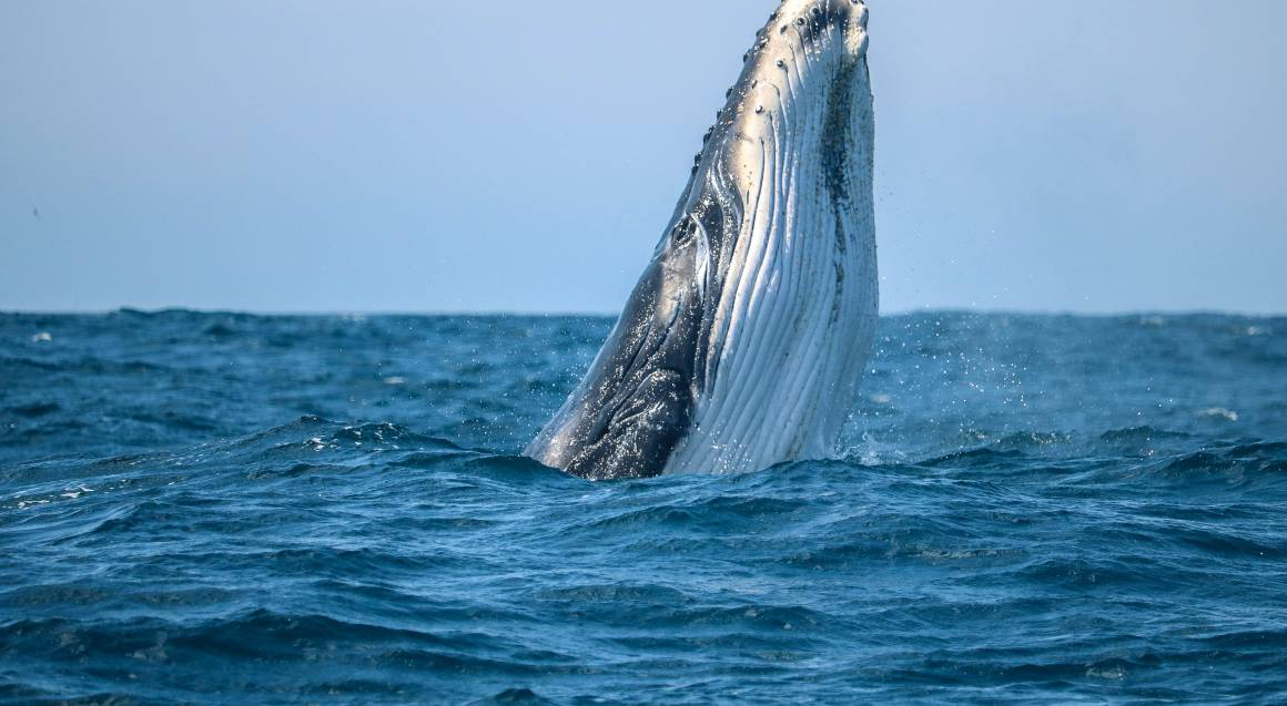 Whale Watch Cruise Jervis Bay