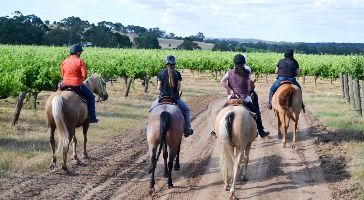 Barossa Valley Horse Riding Tour