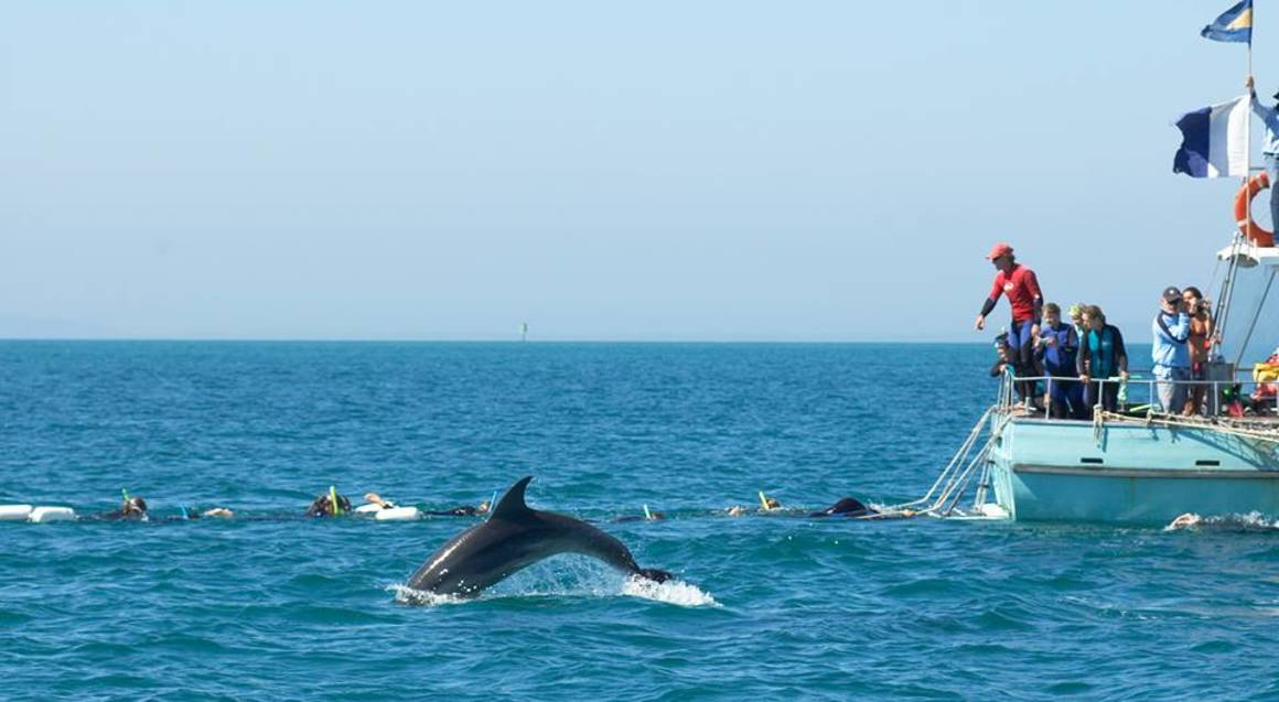 dolphin jumping out of the water with a boat in the background