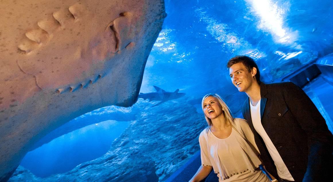 The Aquarium of Western Australia stingray swimming over couple