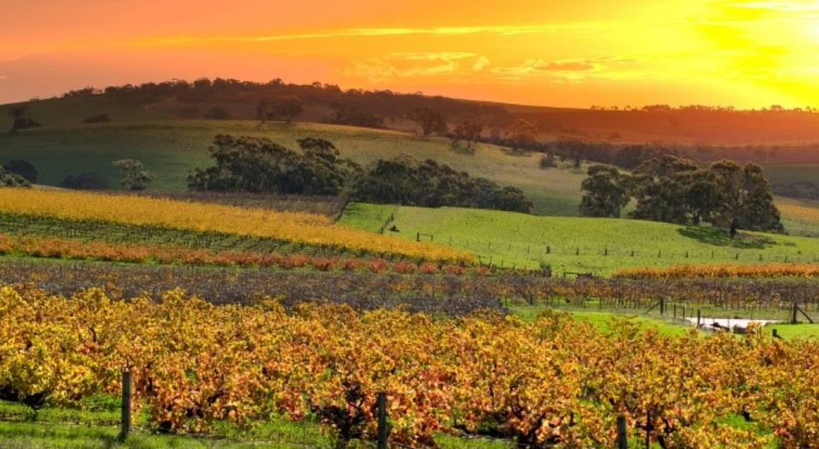 Barossa Valley Scenic Flight - 35 Minutes - For 2