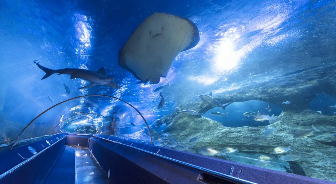 The Aquarium of Western Australia Unlimited Entry Membership