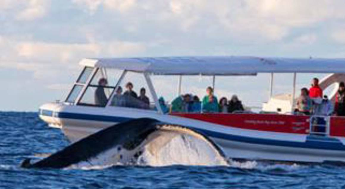 Fast Boat Whale Watch Cruise Jervis Bay - 2 Hours