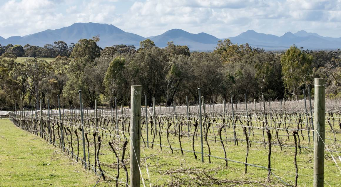 Mount Barker Winery Tour with Local Produce Lunch - Full Day