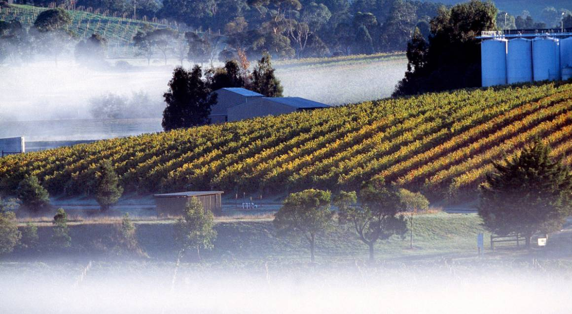 Mornington Peninsula Hot Springs and Private Winery Tour