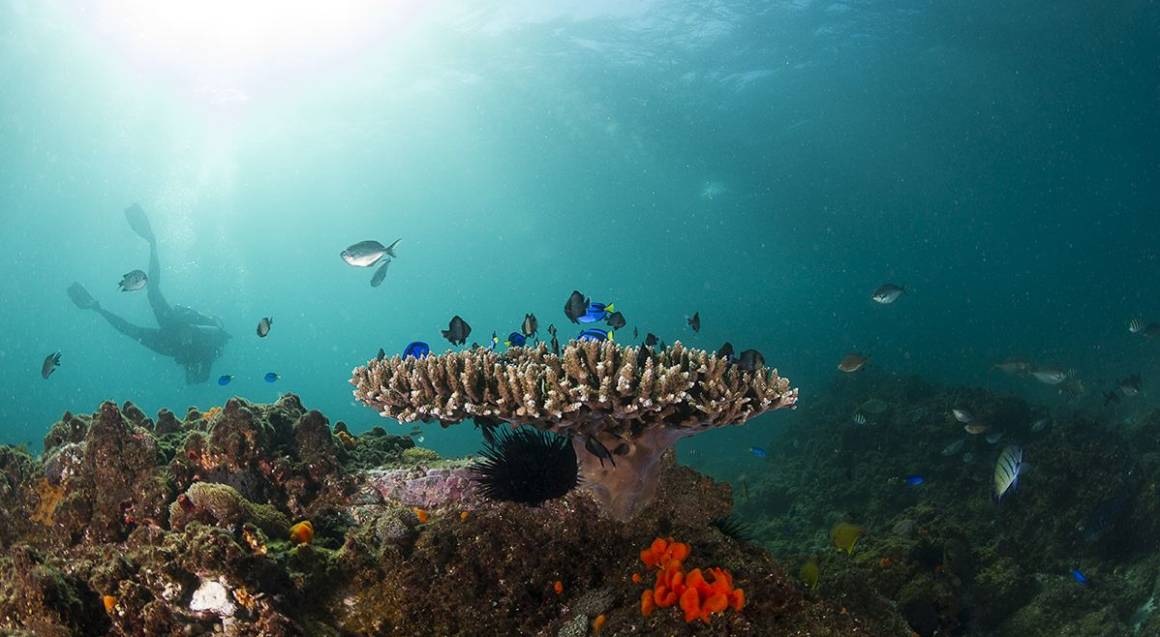 Open Water Dive Course at Julian Rocks - 3 Days