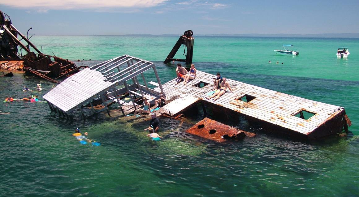 Dolphin cruise group swimming at Tangalooma Wrecks