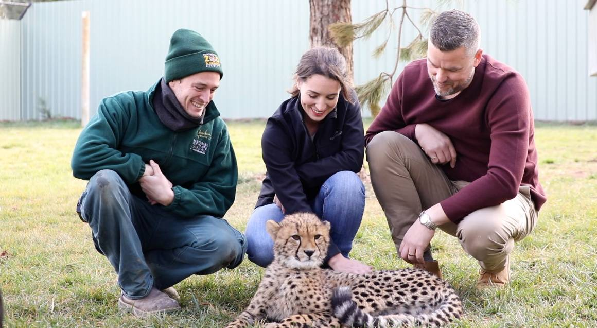 Cheetah Encounter at the National Zoo - Weekend