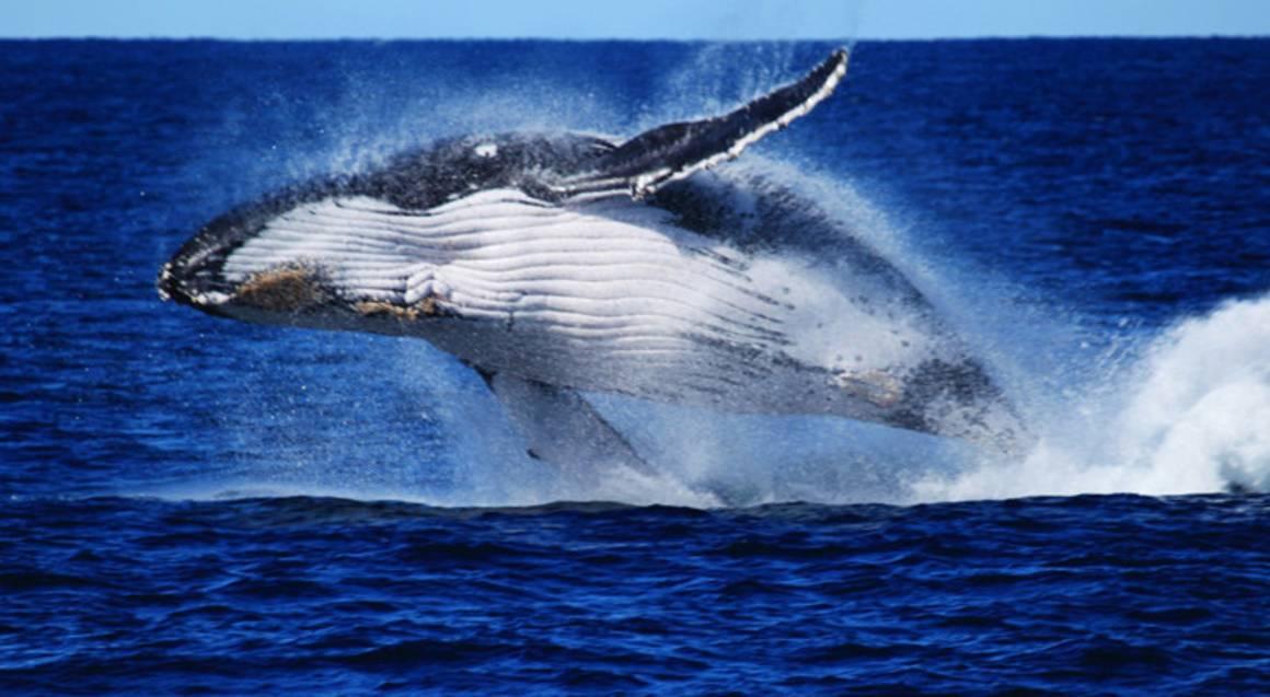 Brisbane Whale Watching Cruise - Full Day
